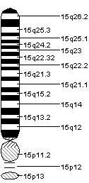 Chromosome_15