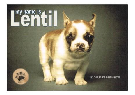 lentil-poster
